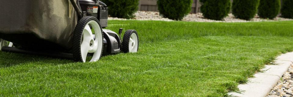 L'herbe sera toujours plus verte de votre côté de la clôture !